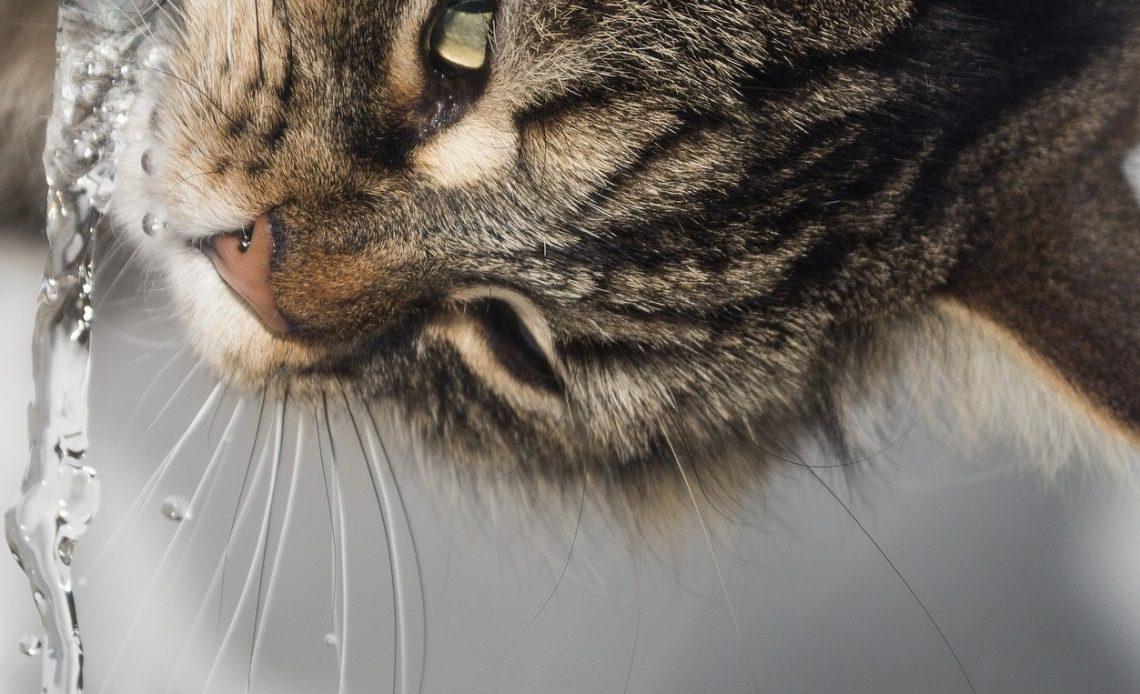 beste fontein voor katten